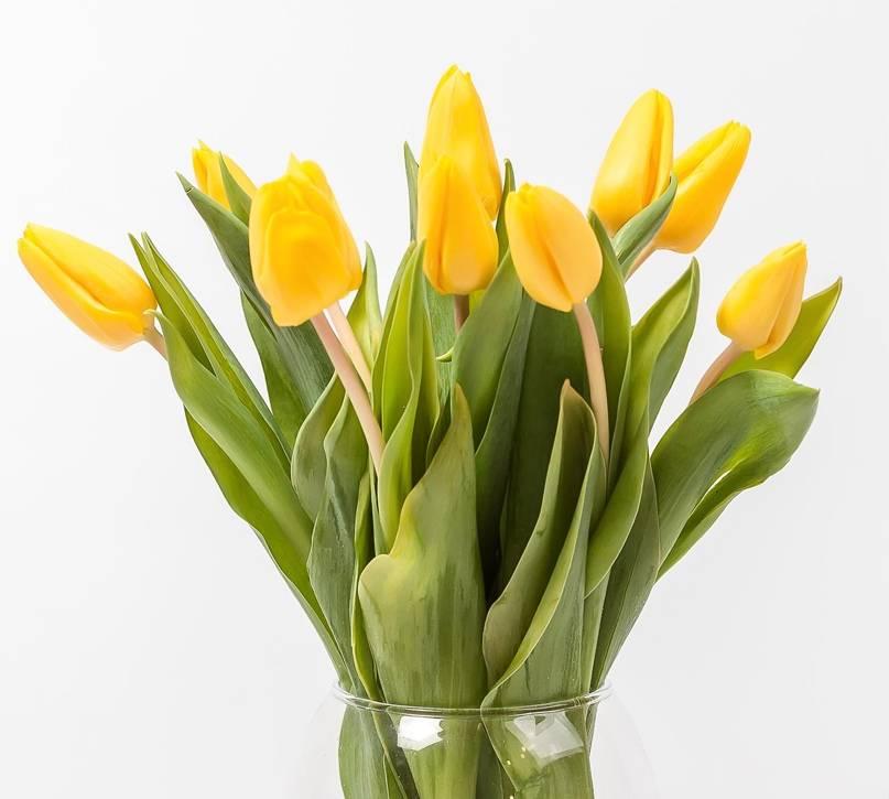 Как хранить тюльпаны в домашних условиях долго