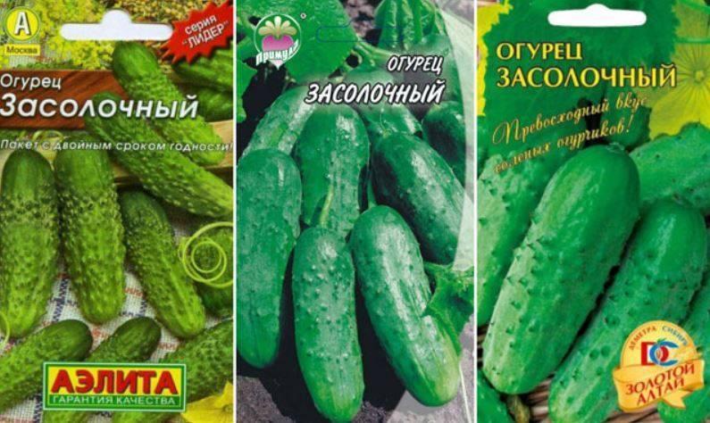 Сорта огурцов для засолки, лучшие виды для консервирования