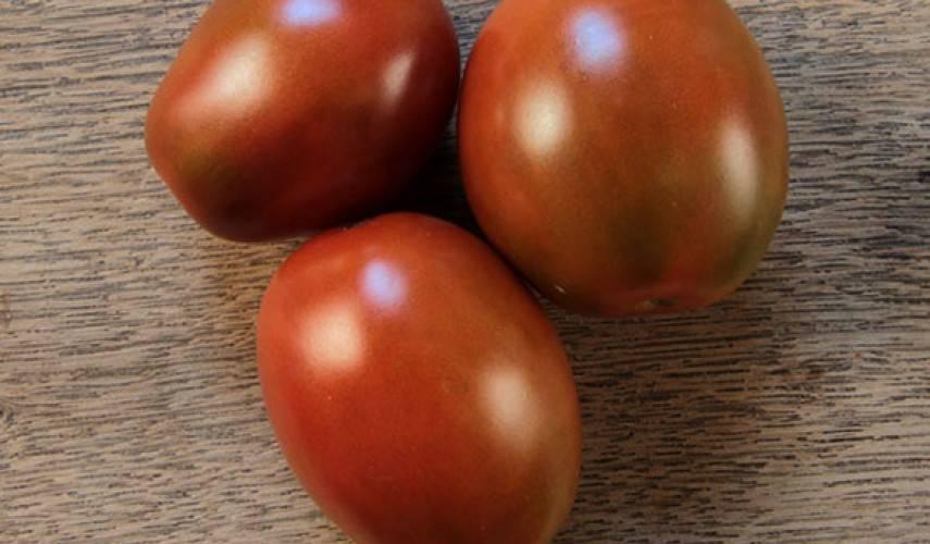 Томат «черный мавр»: описание сорта и его основные характеристики, отзывы, фото, кто сажал,посадка на рассаду, выращивание и дальнейший уход