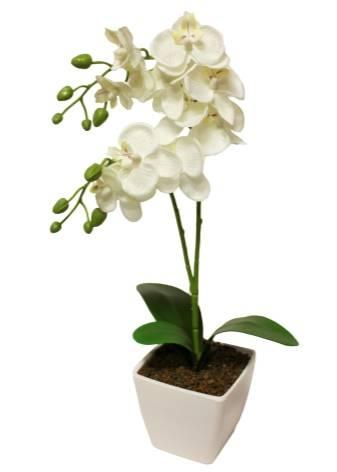 Как реанимировать орхидею: спасение цветка в домашних условиях