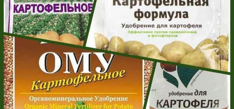 Полив и подкормка картофеля: сроки и периодичность