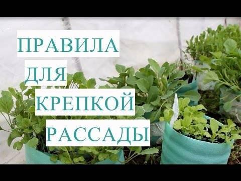 Как сажать рассаду капусты юлия миняева
