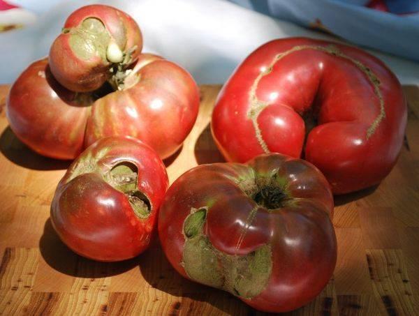 Болезни рассады томатов и лечение: описание, картинки, фото бурой пятнистости, корневой гнили, мозаики, и чем обработать помидоры и опрыскивать их для профилактики?