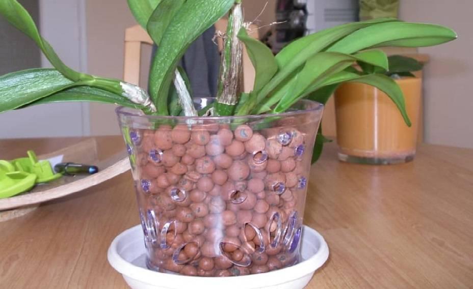 Выращивание орхидеи в закрытой системе (горшке): посадка, полив, плюсы и минусы такой методики реанимации, а также видео и отзывы специалистов