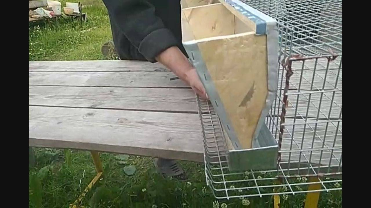 Бункерная кормушка для перепелов: как сделать своими руками