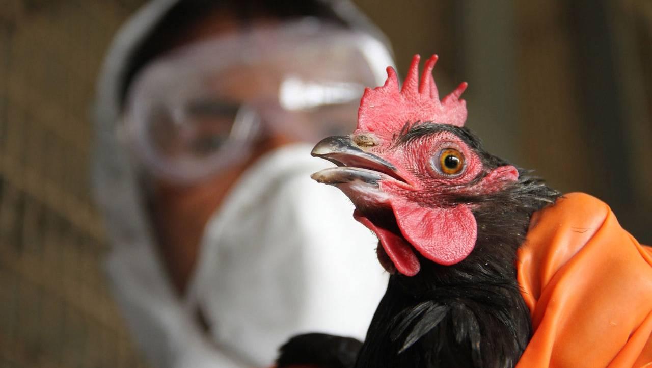 Птичий грипп - причины и патогенез