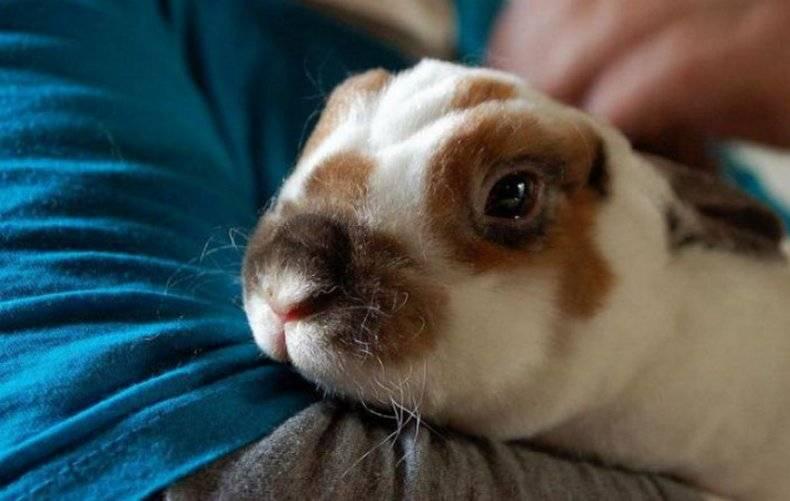Кусаются ли кролики и почему, как их отучить?