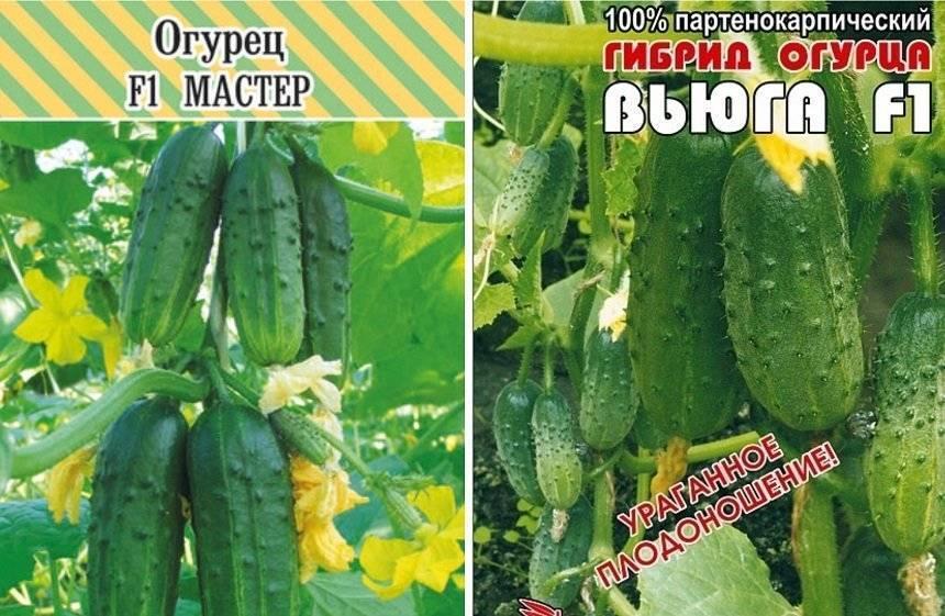 Топ-35 лучших самоопыляемых сортов огурцов для теплицы и открытого грунта: самые урожайные и вкусные
