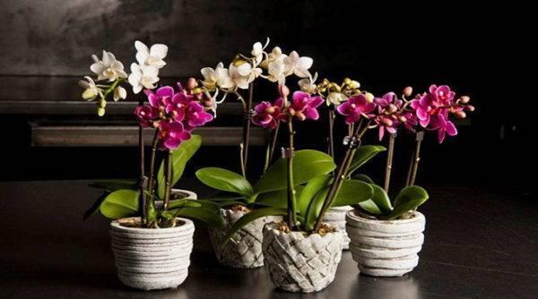 Кора для орхидеи из сосны и не только: подготовка своими руками для посадки в домашних условиях, и какая нужна, подходит ли из магазина, как сажать в этот субстрат? русский фермер