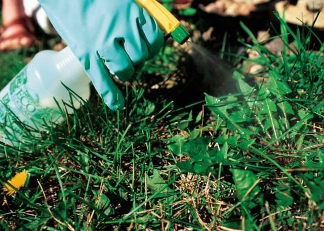 Агрокиллер от сорняков: отзывы и описание