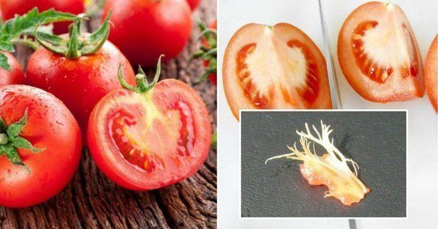 Подкормка золой рассады помидоров и перца: польза народного средства