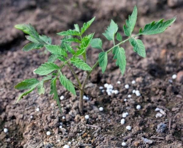 Методика использования минеральных удобрений для томатов