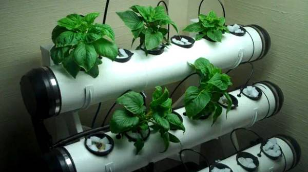 Самодельная гидропоника - отличная идея для максимального роста!