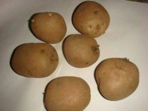 Сорт картофеля киви: описание и характеристика, отзывы