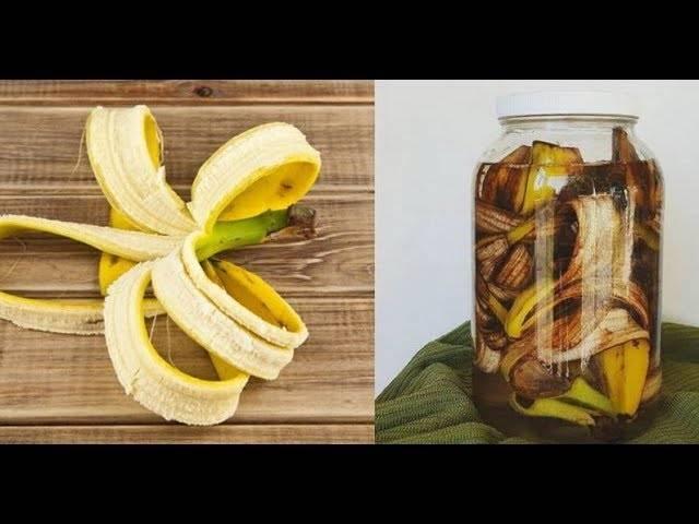 Способы применения банановой кожуры: как удобрение для огорода