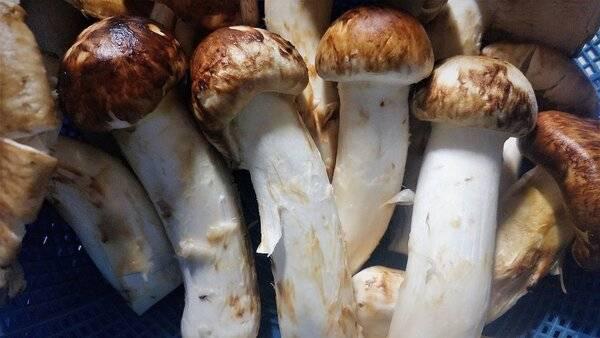 Самые красивые грибы: фото, факты, описание