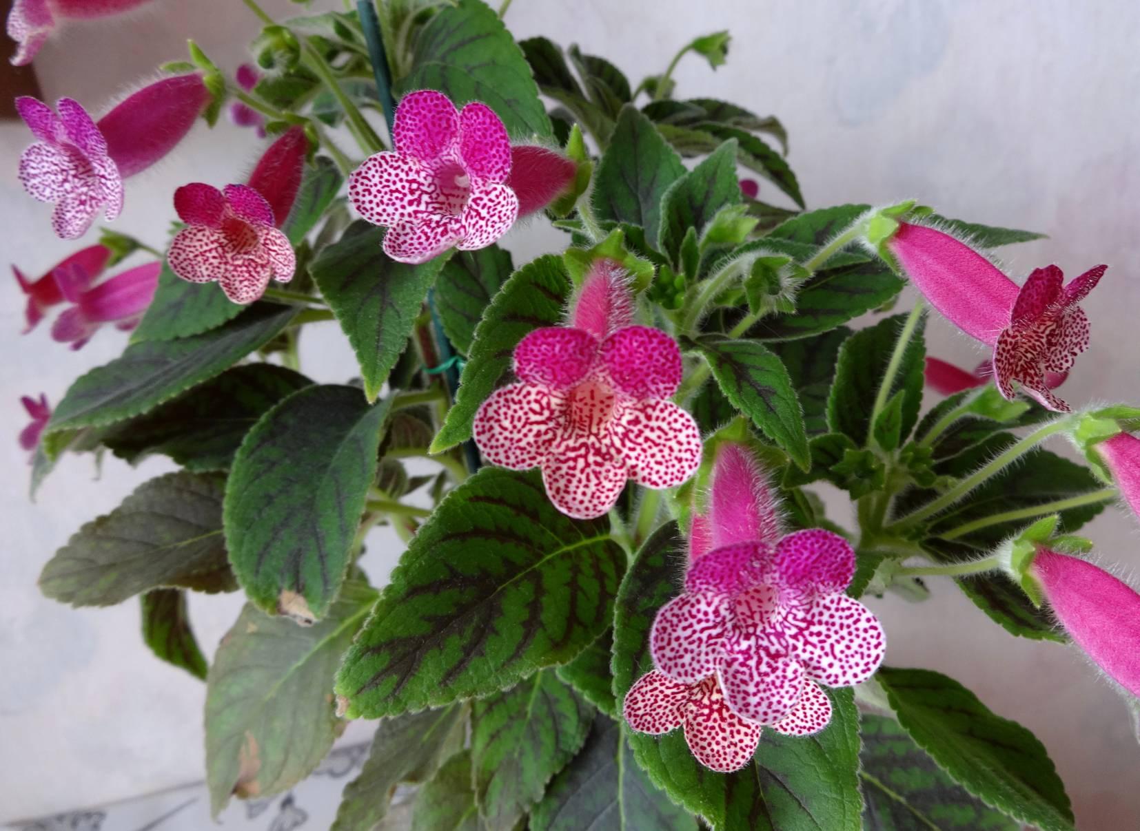 Самые неприхотливые комнатные растения (фото и названия), домашние и цветущие в горшках цветы для дома