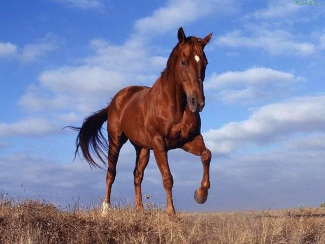 Клички (имена) для лошадей: как назвать коня