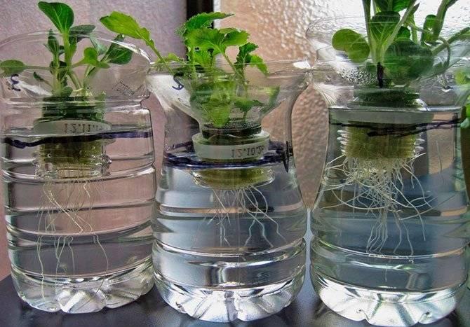 Субстраты применяемые в гидропонике самый важный компонент при выращивании растений методом гидропоники.
