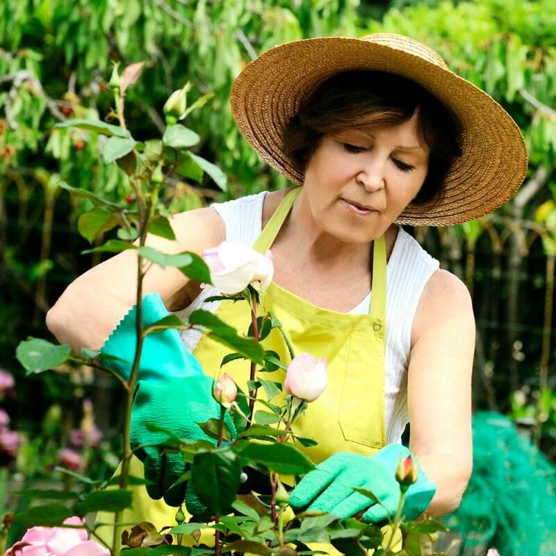 Как укрывать розы в сибири: способы, фото