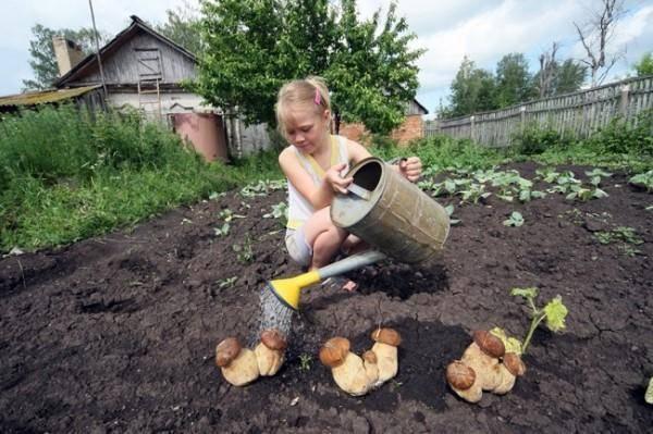 Как вырастить грибы в домашних условиях пошагово в квартире