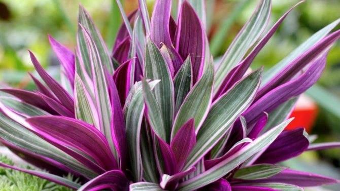 Мирт – приметы и суеверия: цветок любви и семейного счастья