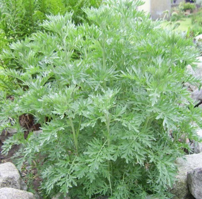 Лекарственные травы от аллергии | компетентно о здоровье на ilive