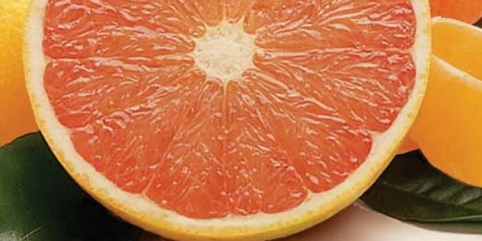 Грейпфрут свити: польза и вред, вкус, калорийность, как выбрать спелый плод