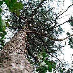 Как убрать пень и уничтожить корневище без корчевания: способы химического удаления деревьев и пеньков при помощи селитры, мочевины и других реагентов