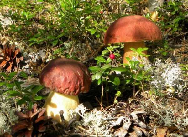 Какие грибы растут на деревьях
