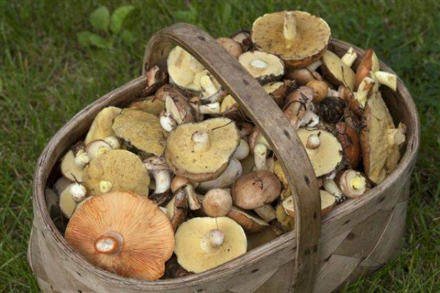Грибы московской области 2021: когда и где собирать, сезоны и грибные места