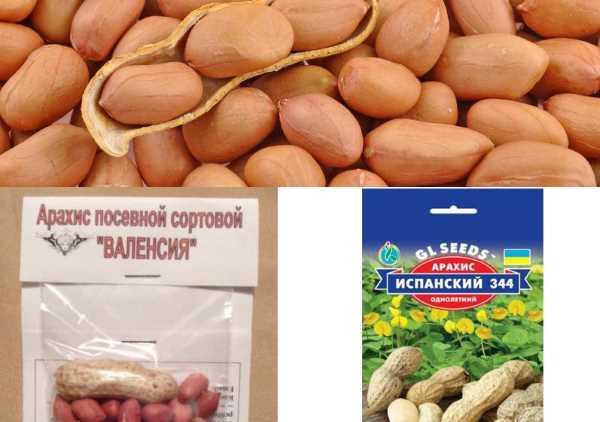 Сложно ли вырастить арахис в домашних условиях в горшке и как это сделать? подробная инструкция и рекомендации