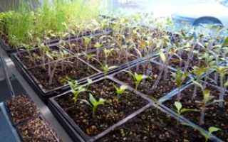 Томат аделина — описание сорта, фото, урожайность и отзывы садоводов