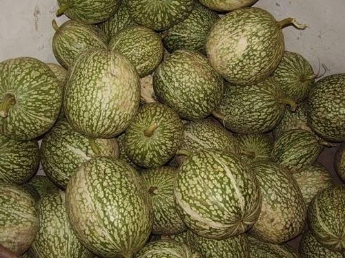 Полезная информация по выращиванию фиголистной тыквы семенами и рассадой