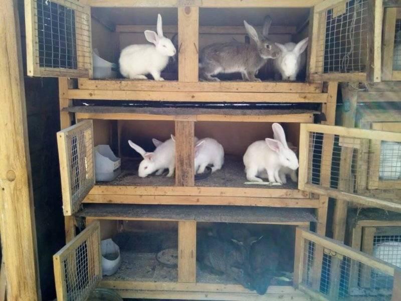 Вольер для кроликов (32 фото): как сделать загон на улице своими руками? устройство и чертежи для построения кроличьего вольера в сарае