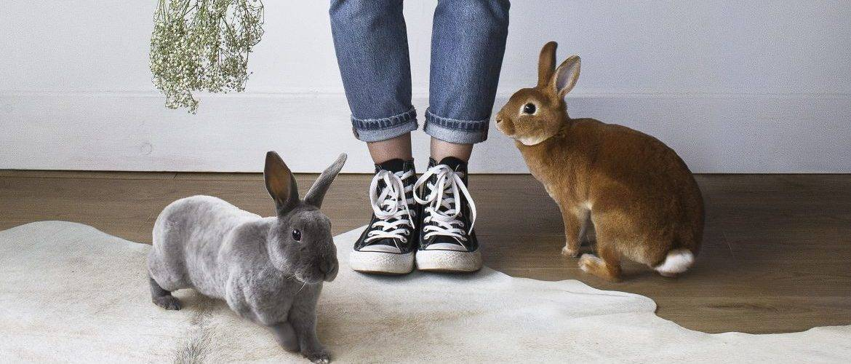 Учим кролика ходить на лоток