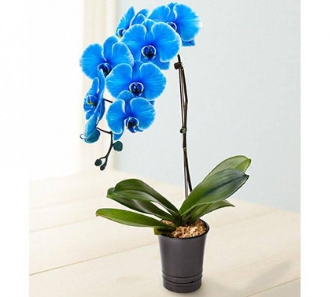 Когда надо поливать орхидею после покупки в домашних условиях, как понять, что пора и как узнать о необходимости увлажнения?