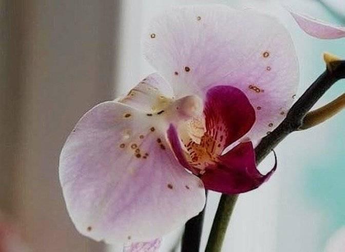 Болезни листьев орхидей
