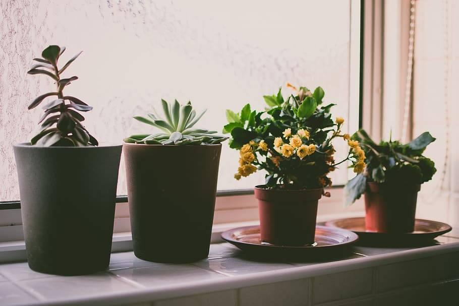 Как ухаживать зацветами? 13 советов от флористов по уходу за букетами и комнатными цветами