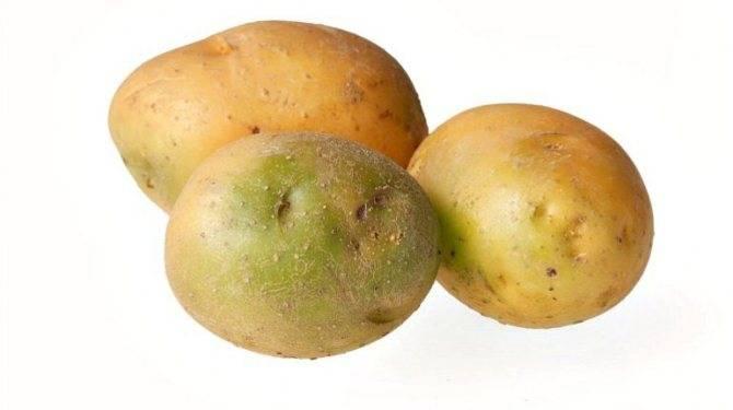 Физиологические последствия употребления картофеля | крамола