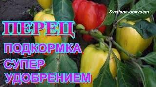 Чем и как подкормить рассаду перцев для роста