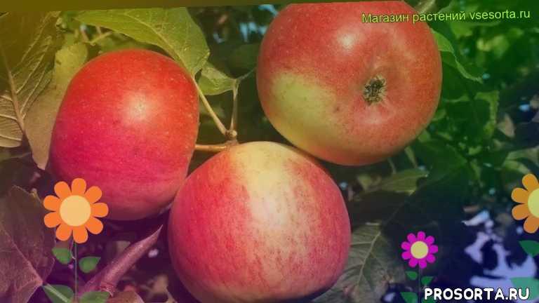Яблоня мартовское: описание сорта, фото, отзывы