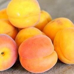 Самоплодные сорта абрикоса с фото и описанием