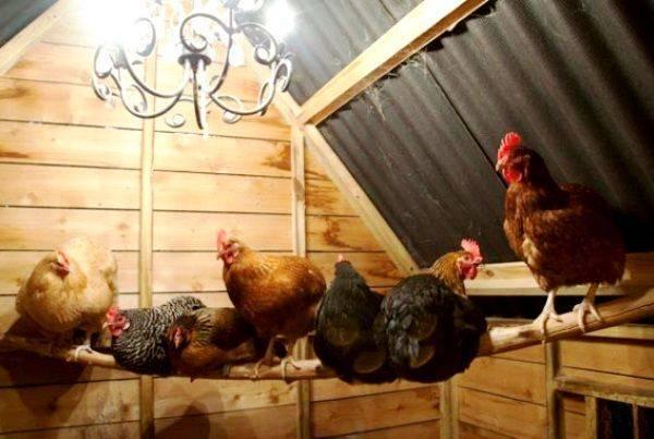 Кормление кур зимой для лучшей яйценоскости