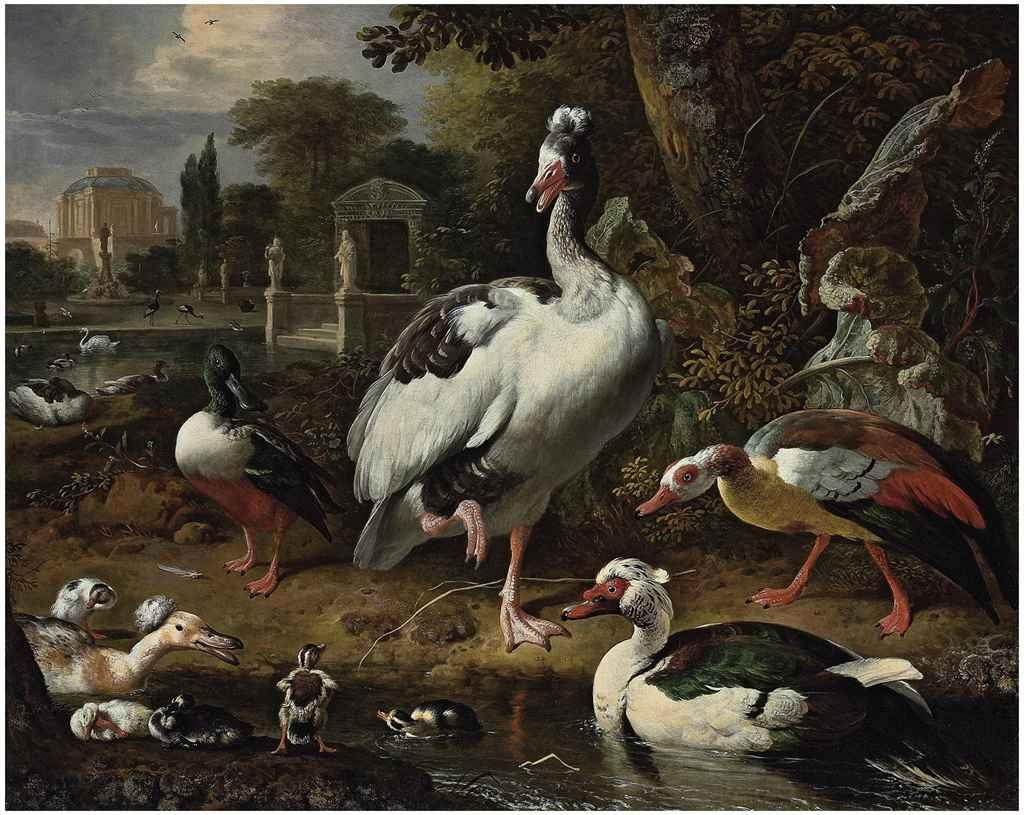 Хохлатые утки: описание русской, украинской и прочих пород домашних птиц с хохолком