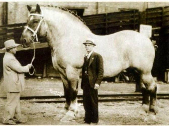 Порода лошадей «першерон»❤️