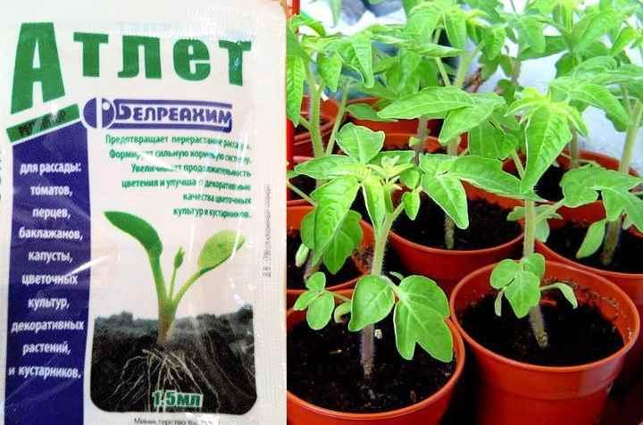 Атлет для томатов плюсы и минусы   огородовед