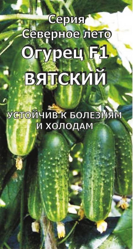 Огурец вятский f1: описание сорта, отзывы, фото