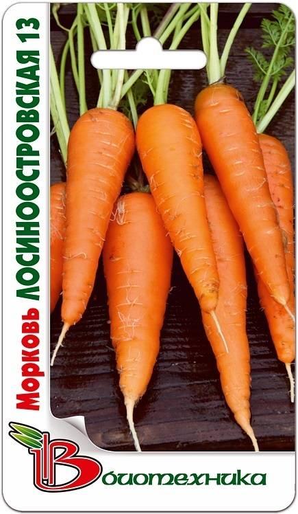 Морковь лосиноостровская - описание сорта и выращивания