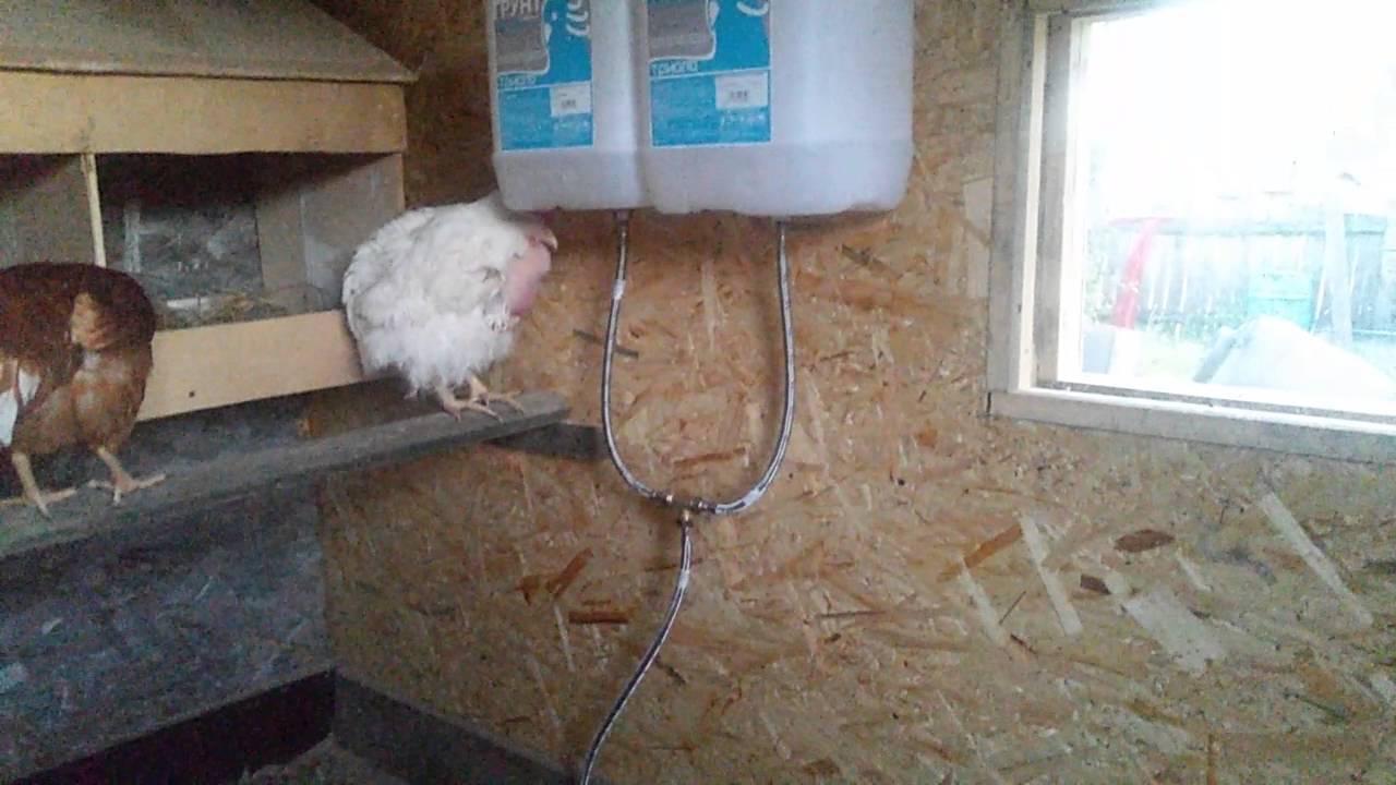 Делаем поилку для куриц и цыплят своими руками, полезные советы